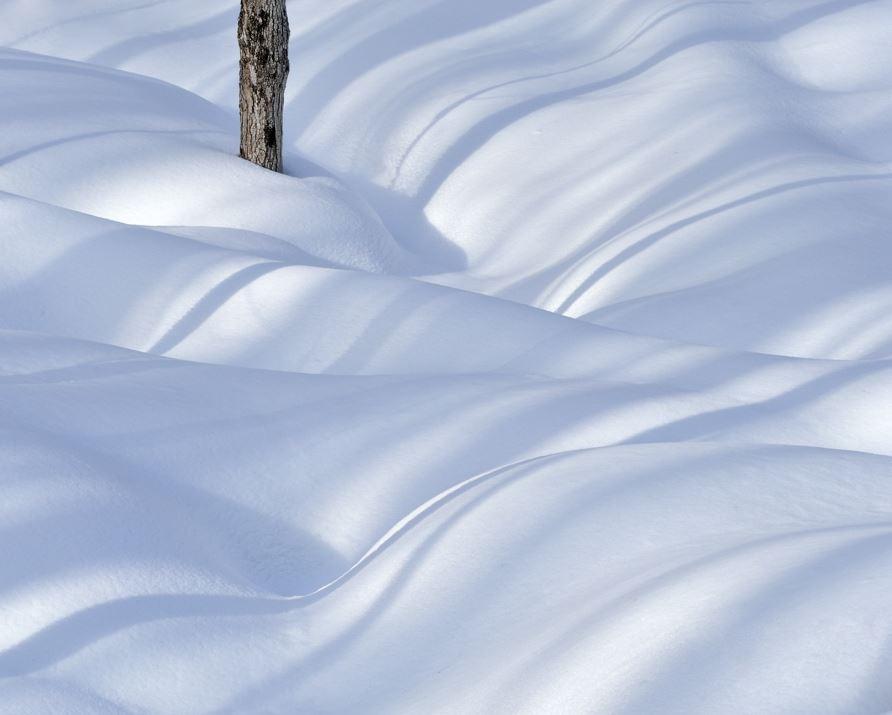 Tree, Snow & Shadows I