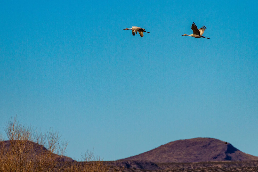 First Visit Bosque del Apache